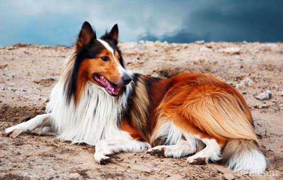 狗狗驱虫药多久吃一次