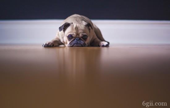 狗狗咳嗽的原因有几种 狗狗一直咳嗽是什么原因