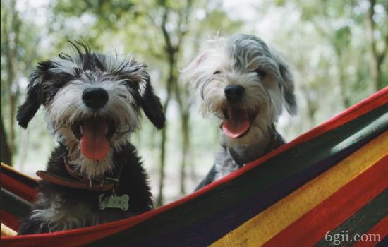 狗狗得细小有什么症状 狗狗得细小的症状