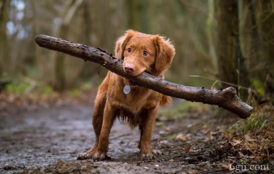 狗狗发烧怎么引起的 引起狗狗发烧的原因