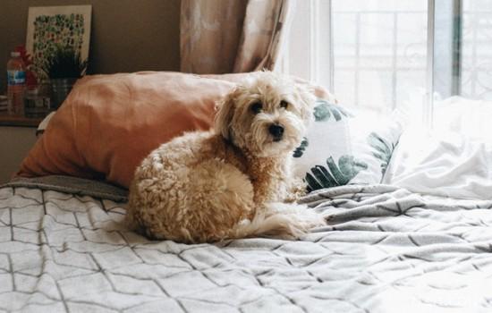 小狗狗贫血有什么症状 狗狗贫血有什么症状有哪些