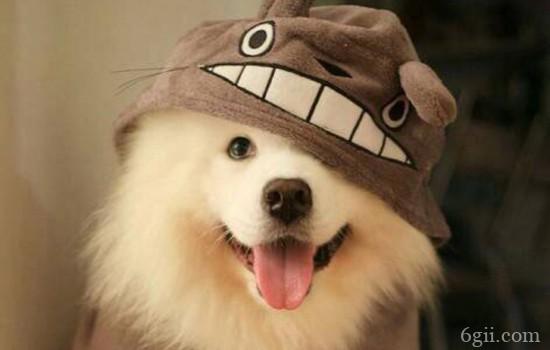 狗狗眼睛里有红色的线条状是什么