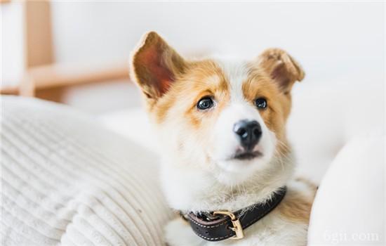 狗狗的正常体温是多少度