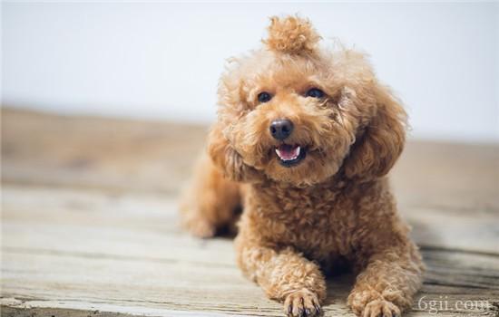 狗狗子宫蓄脓有什么症状