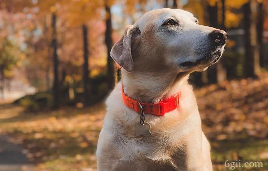 怎么区分犬瘟和感冒 如何区分犬瘟和感冒