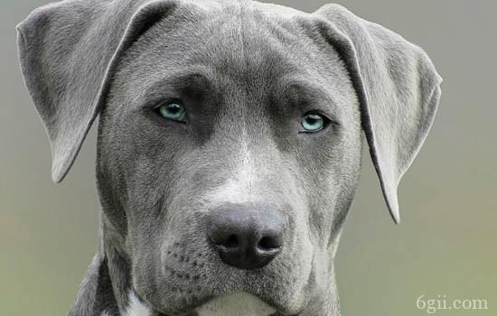 狗狗狂犬病会有什么症状