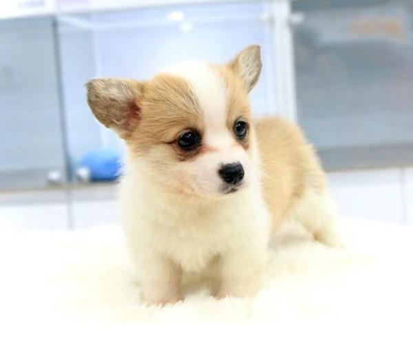 幼犬会有狂犬病吗