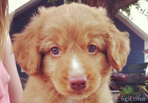 狗狗流眼屎是什么原因