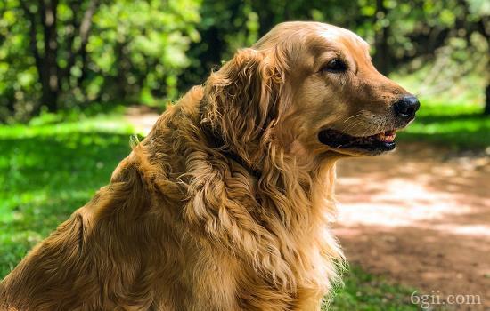 狗细小可以打驱虫药吗