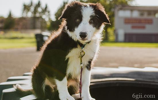 星期狗发病前什么症状