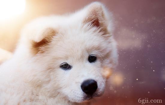 什么是狗狗上呼吸道感染