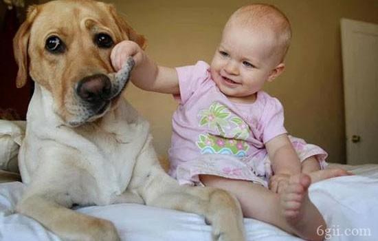狗狗生病了该怎么照顾? 教你最全面的护理!
