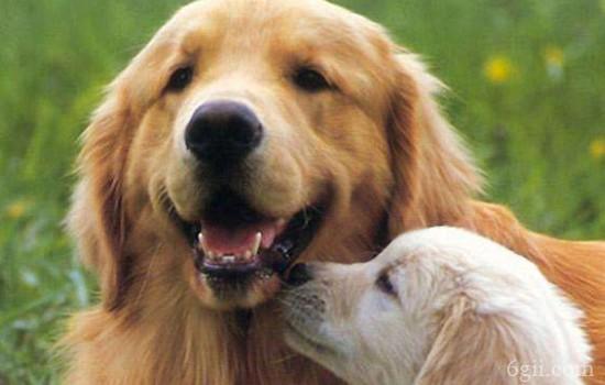 狗狗吃草是什么原因? 吃完后总是呕吐,正常吗?