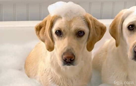 狗狗经常呕吐是怎么回事? 看频率来判断!