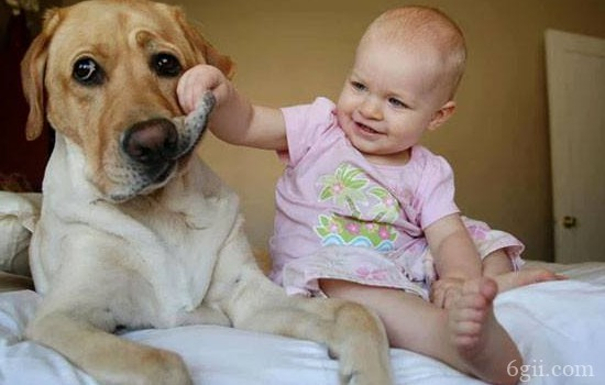 狗狗焦虫病 狗狗焦虫病的初期症状