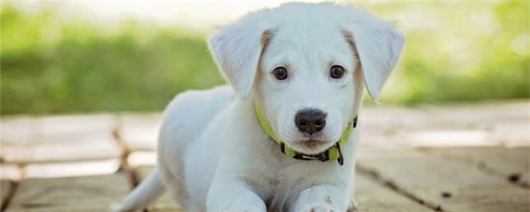 狗狗呕吐物有哪些种类 如何通过呕吐物来分析原因