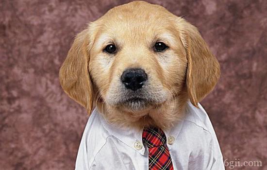 狗狗得了佝偻病怎么办? 如何防止狗狗佝偻病?