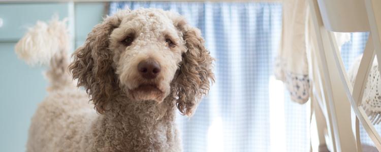 小孩被泰迪狗咬流血了怎么办 如何预防狂犬病?