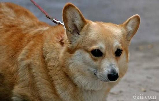 狗狗螨虫皮肤病怎么治? 补充维生素很重要哦!