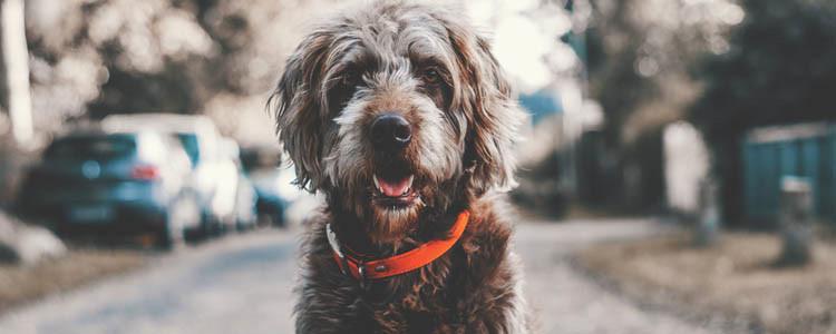 狗狗心力衰竭怎么治疗 不要再安排运动和训练啦!