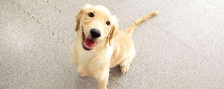 秋季狗狗脚掌蜕皮 可能是细菌感染?