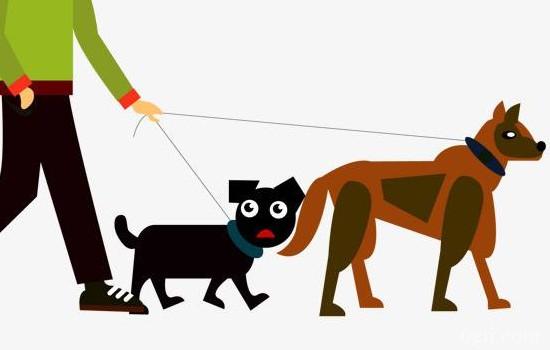 狗狗肠胃菌群失调的原因及家庭治疗方法