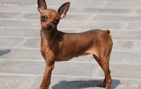 狗狗可以吃 阿莫西林 最好是宠物专用的哦!