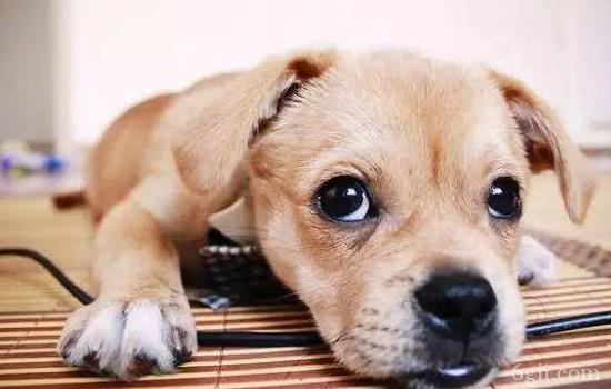 狗狗感冒会传染给人吗? 你这担心的太多余了吧!