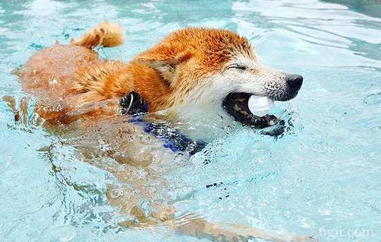 人感冒会传染给狗狗吗 真相原来是这样?