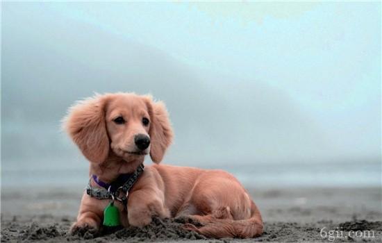 狗狗一直呕吐是什么原因? 这些情况都有可能哦!