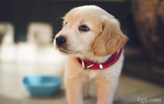 狗狗得抑郁症的表现 面对抑郁应该怎么做
