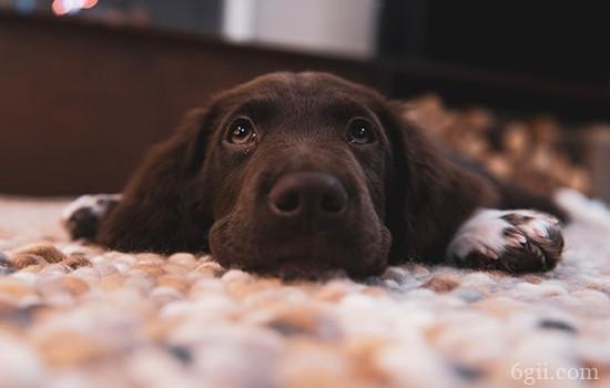 狗狗常见病及治疗方法 一时找不到医院千万别慌!