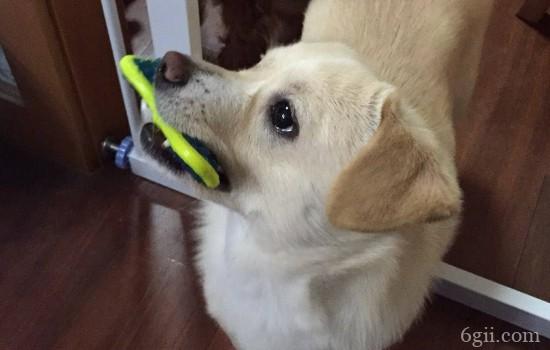 狗狗去世前会什么表现 这五种表现太让人心疼了!