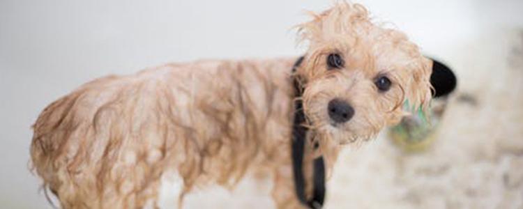 狗狗身体不好的症状 这些怪异行为是危险信号!