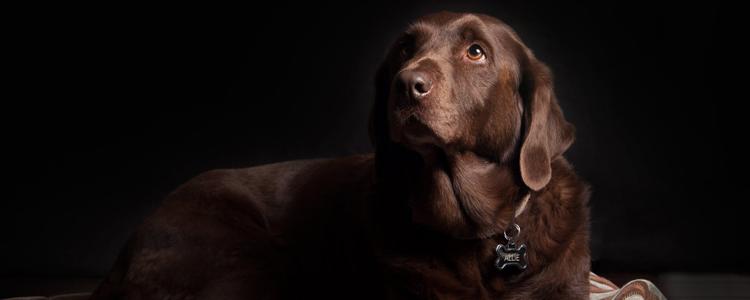 狗狗吃了袜子会阻塞吗 要不要禁食?
