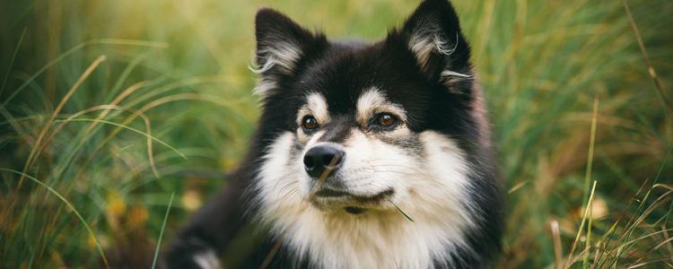 狗狗月经后白色分泌物 是不是炎症?
