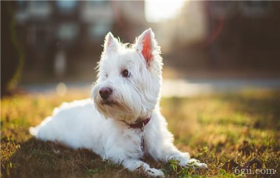 狗狗便秘的原因及正确应对方法