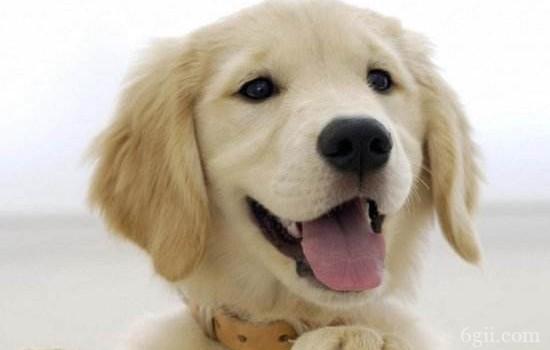 狗狗胃出血的症状 这些原因都是导致狗狗胃出血的元凶