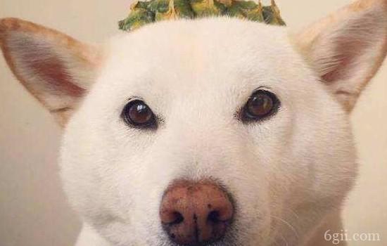 狗狗维生素a缺乏的症状 少了这种元素也是不可以的!