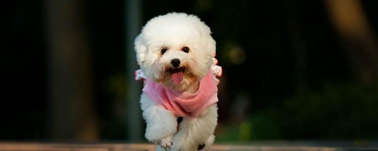 狗狗肝腹水怎么治疗 需要了解狗狗的病情程度!