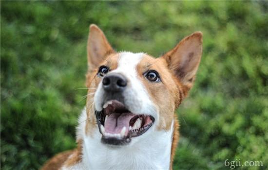 狗狗为什么会突然咬人 这四种原因你真的知道吗