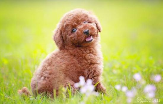 训练狗狗握手 小伙伴面前又可以吹嘘的技能