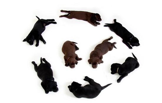 训练罗威纳犬的技巧 烈性犬如何轻松驯服