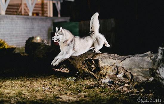 怎么让狗狗搜东西 记性不好的主人有救啦