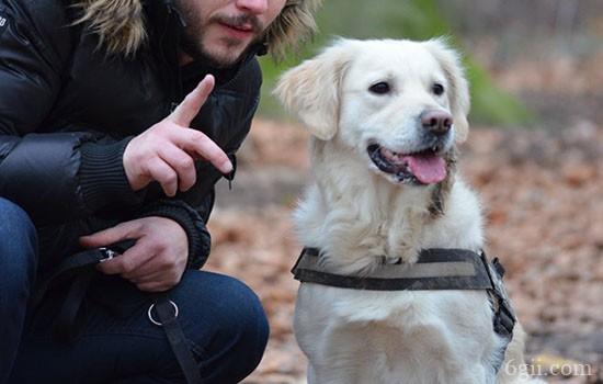 拉布拉多训练教程 别再说你的狗教不会了!
