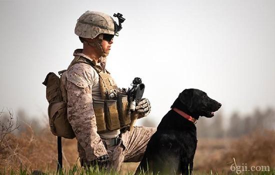 狗狗敏捷性训练方法教程【图】 狗狗敏捷性也需要训练?
