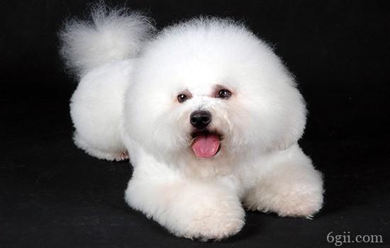 狗狗训练技巧 你家狗狗怎么训练都教不会?