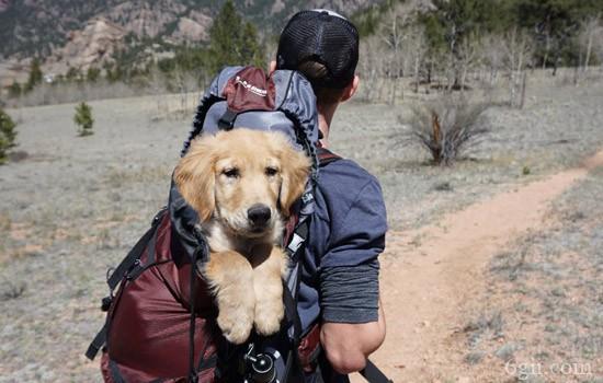 狗狗召回训练 再也不怕出门撒手没