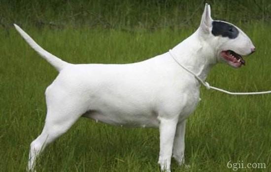 智商最低的狗狗排名 最难以训练的狗你敢养?
