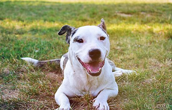 狗狗训练的项目有哪些 狗狗基本训练最全攻略